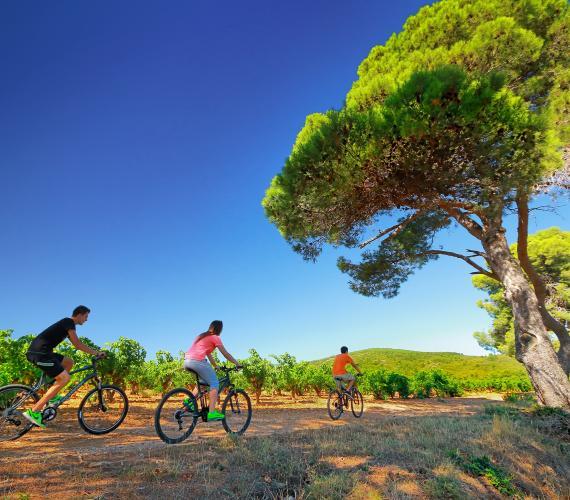 En vélo dans le vignoble des Corbières