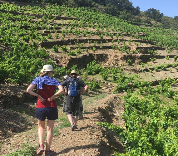 Randonnée dans les vignes - Collioure - Pyrénées-Orientales